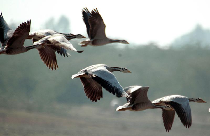 Lakh Bahoshi Bird Sanctuary
