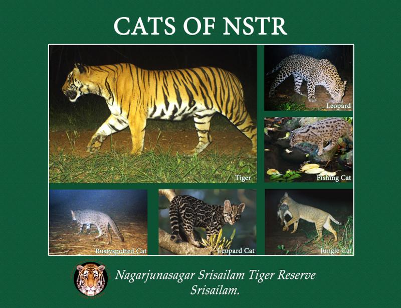 Nagarjunsagar-Srisailam_Tiger_Reserve